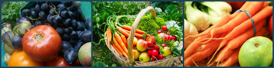 Juice Feasting Journey for Good Health